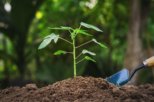 Planting young tree in garden