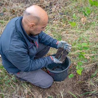Planting young trees in the forest after devastating blaze and drought