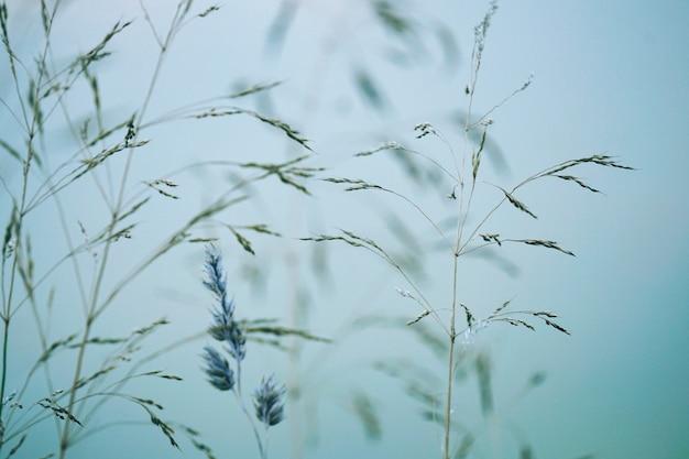 가을 시즌 자연 속에서 식물과 푸른 하늘, 파란색 배경