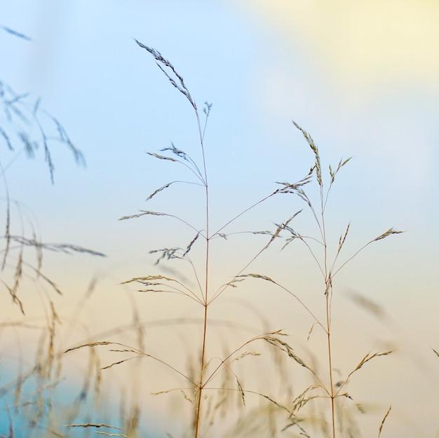가을 시즌 자연 속에서 식물과 푸른 하늘, 파란색 배경 프리미엄 사진