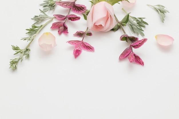植物と白い背景の上の花