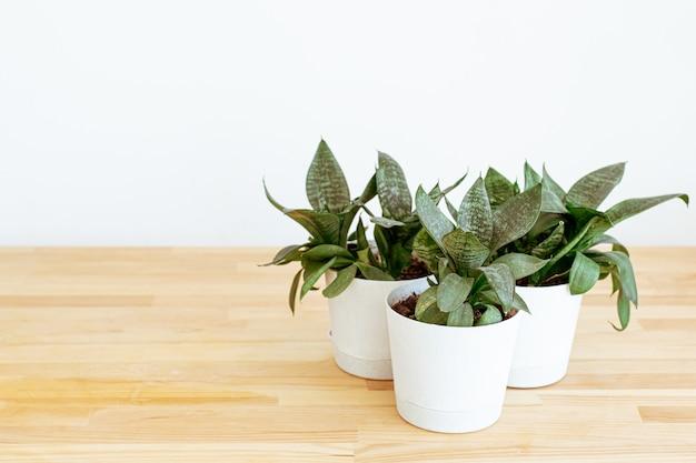 白い背景の上のテーブルに自宅で植物。