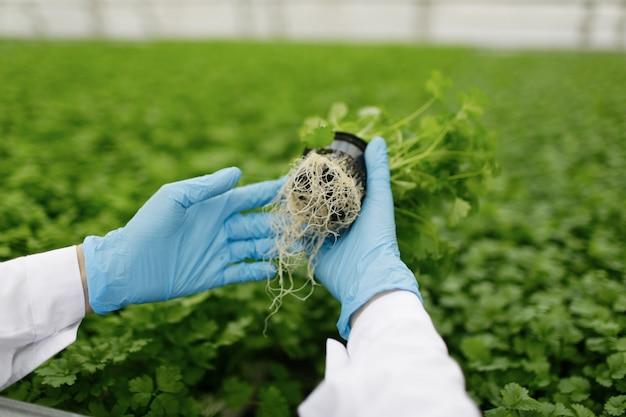 温室に植えられている植物