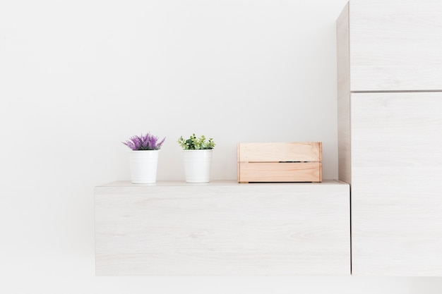 Plants and box near fridge