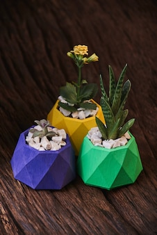 Plants in colored concrete pots on wooden background. clean photo. violet, green and yellow post
