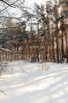 Растения, покрытые снегом и инеем