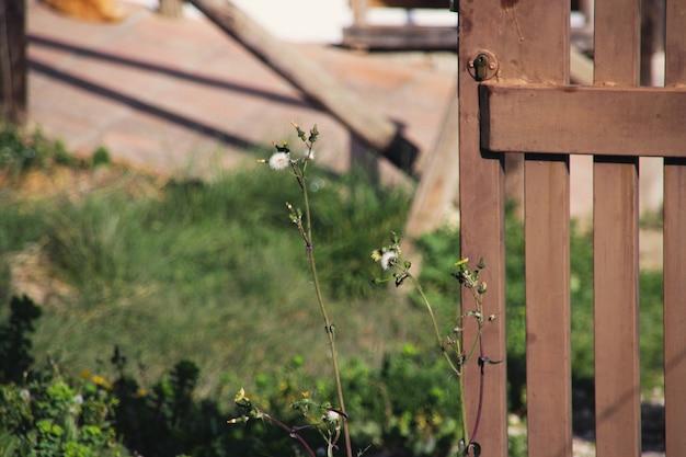 Plants and door