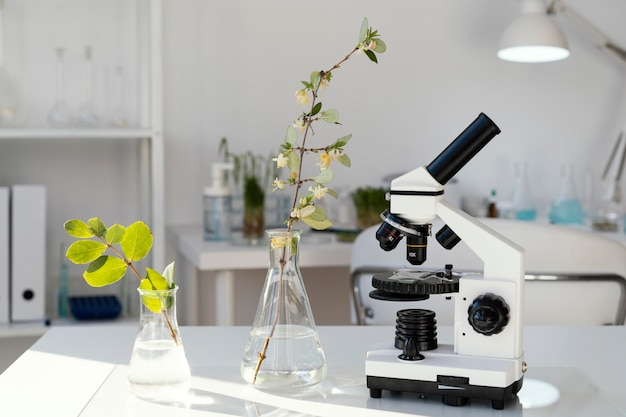 Plants in erlenmeyer flasks arrangement