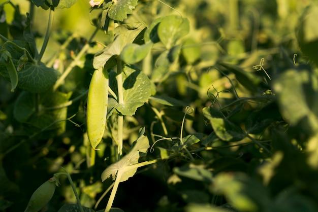 Концепция поля здорового сельского хозяйства растений