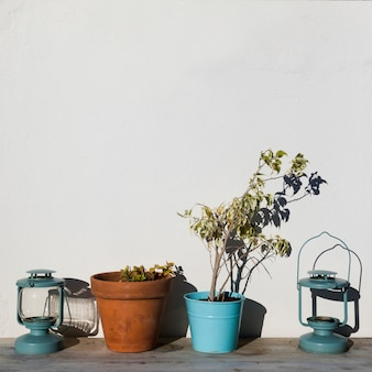 Plants in flower pots with lanterns