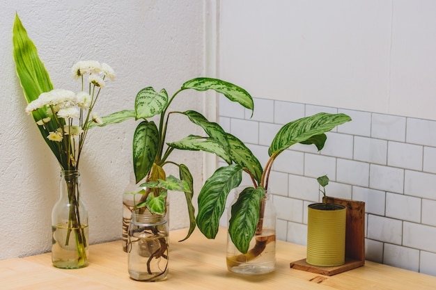 Plants and flowers in a corner of the house, white wall and wood table.