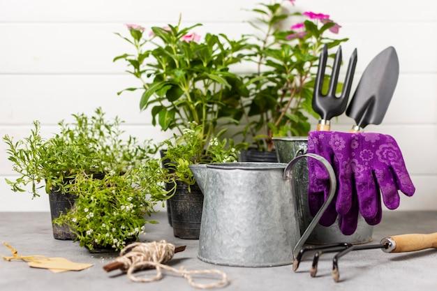 Садовые инструменты растений крупным планом