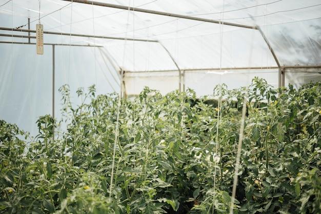 温室で育つ植物