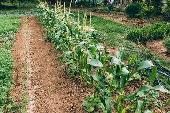 Plants growing on farm