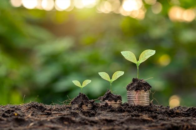 동전 더미와 흐린 식물 배경으로 토양에서 자라는 식물