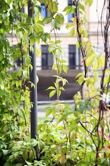 壁に生えている植物