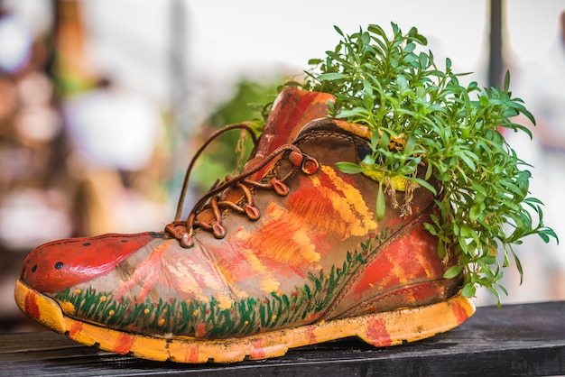 Plants growing in painted shoe