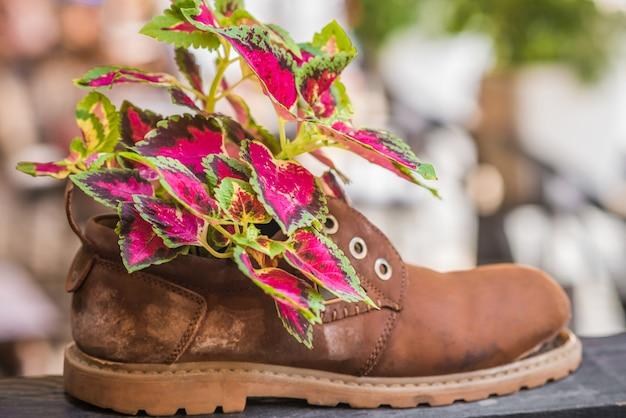 Plants growing in tattered shoe