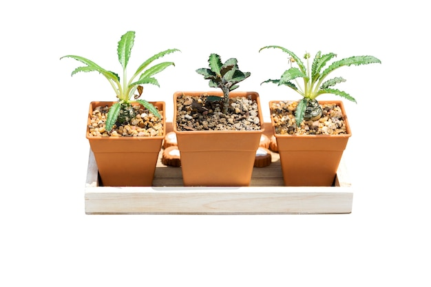 Plants grown in pots small for home and garden isolated.