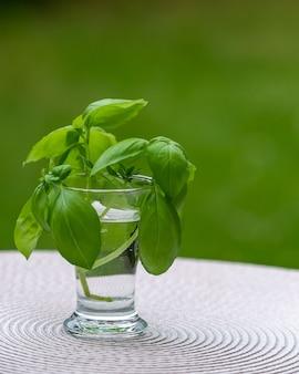 木製のテーブルの上に水で満たされたガラスの植物