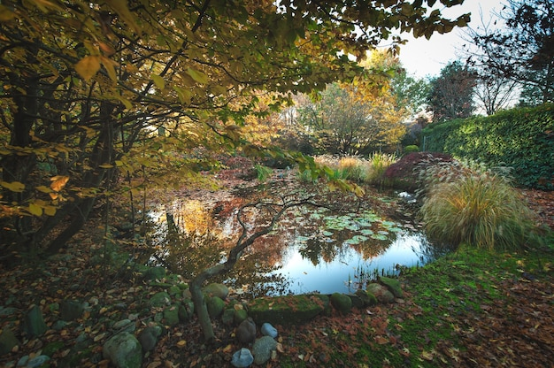 연못에 비친 가을의 식물들