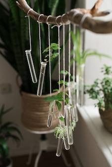 Растения в посуде. саженцы в колбе. зеленые растения в стеклянной колбе.