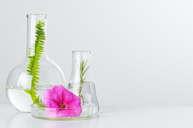 実験用ガラス器具の植物。スキンケア製品と医薬品化学研究コンセプト