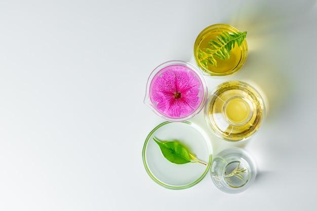 実験用ガラス器具の植物。スキンケア製品および医薬品化学研究コンセプト