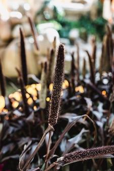 自然界の植物