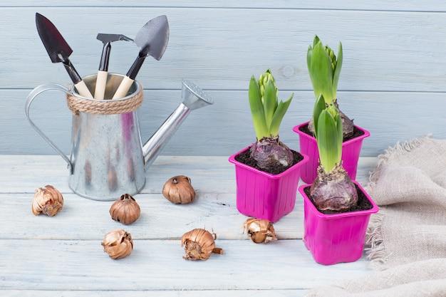 ピンクのポット、種子、水まき缶のツール付き植物