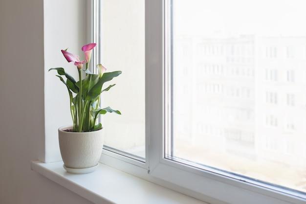 실내 흰색 창턱에 냄비에 식물