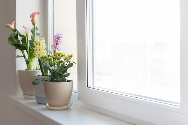 실내 흰색 창턱에 화분에 식물