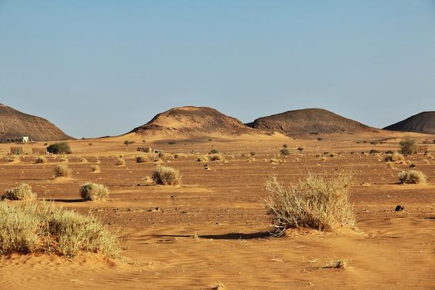 Растения в пустыне сахара, судан