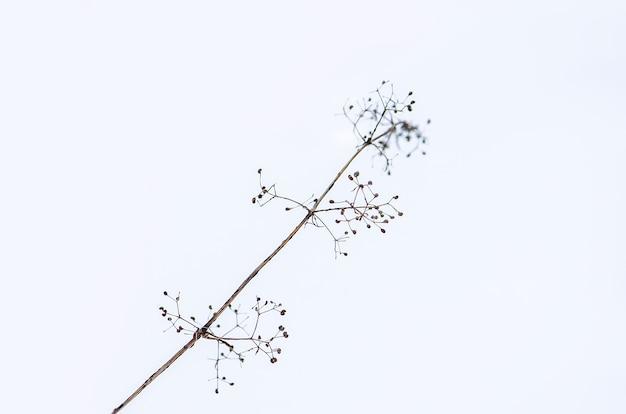 屋外の雪の中の植物。冬の牧草地。