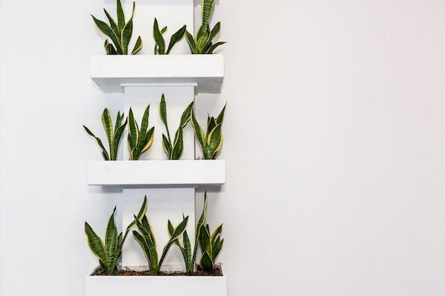 선반 위의 밝은 벽에 있는 네모난 화분에 있는 식물. 사무실 및 가정 장식, 흥미로운 디자인 솔루션