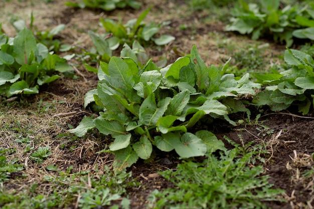 地面の植物