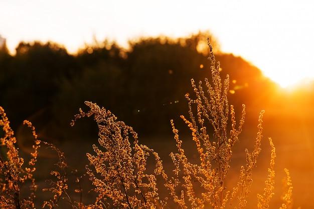 Растения в парке на закате. волшебный свет вечернего солнечного света