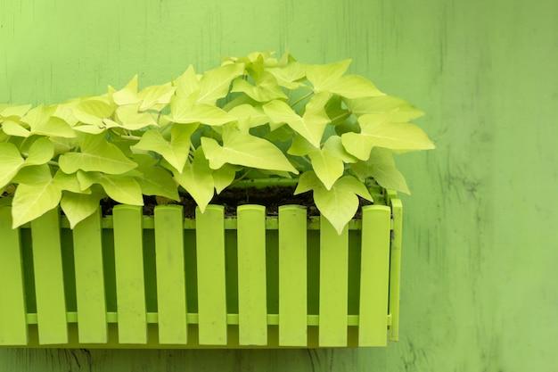 Растения в деревянном горшке на зеленом фоне