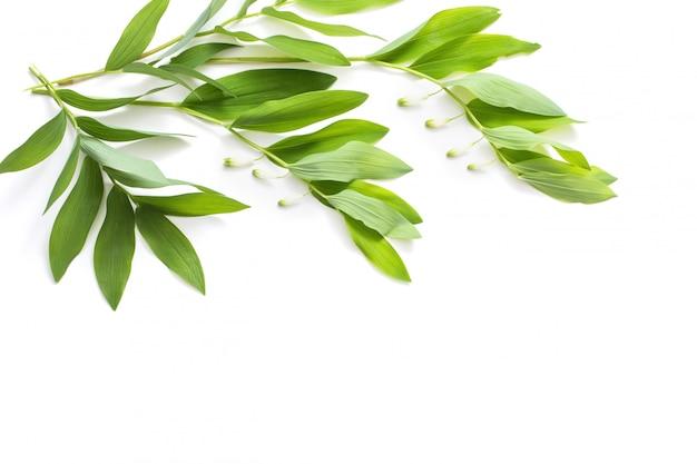 흰색 배경에 고립 된 식물