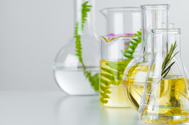Plants in laboratory glassware. skincare products and drugs chemical researches concept