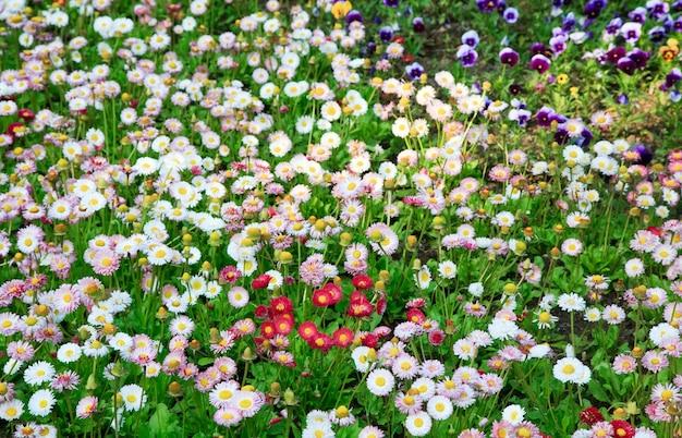 꽃과 데이지 식물 (봄 배경)