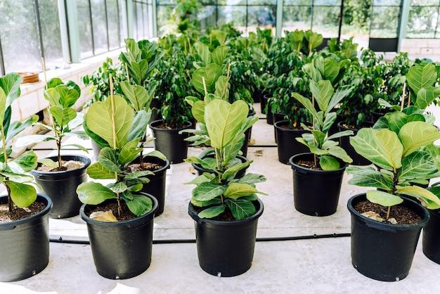 온실의 화분에 있는 다양한 종류의 식물.