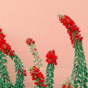 ピンクのコンセプトの植物。ピンクの壁にカナリアの花