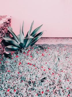ピンクのコンセプトの植物。自然。カナリア諸島