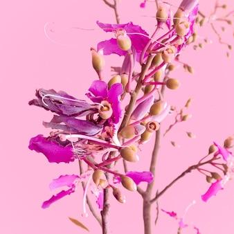 ピンクのファッションコンセプトの植物。ピンクの背景の花