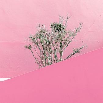 ピンクのファッションコンセプトの植物。最小限のデザイン
