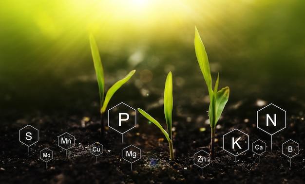 디지털 미네랄 영양소 아이콘이 있는 밝은 배경의 식물