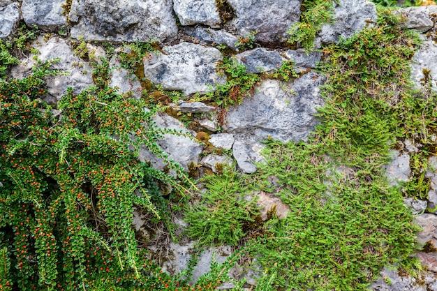 Растения на камнях для рекламы