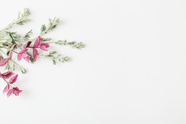白い背景の上の植物
