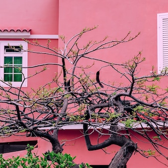 Plants on pink concept. tropical tree on pink background wall